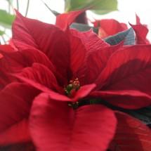 Winter - Advent - Weihnachten