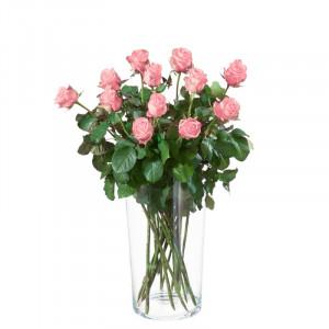 12 Rosa Rosen